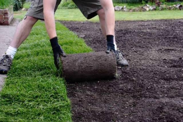 Раскатка газонного рулона