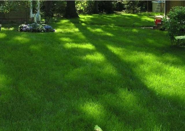 Затененный газон