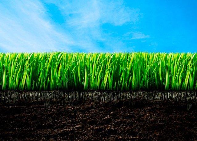Корневая система газона