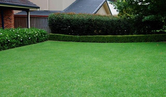 Красивый газон