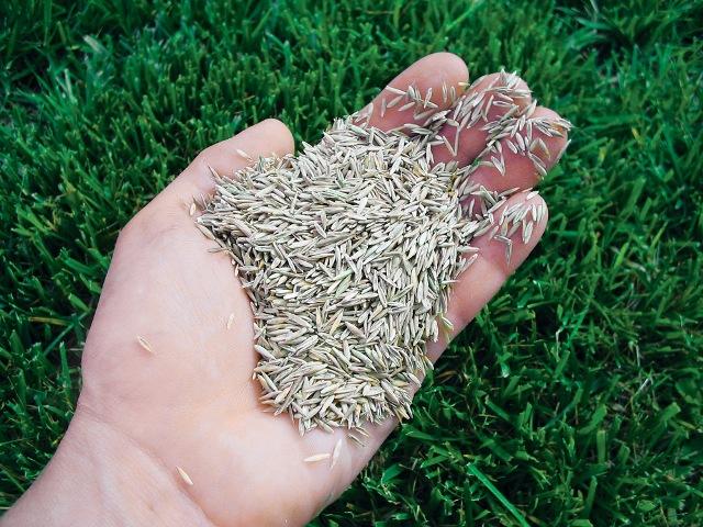 Семена травы для газона