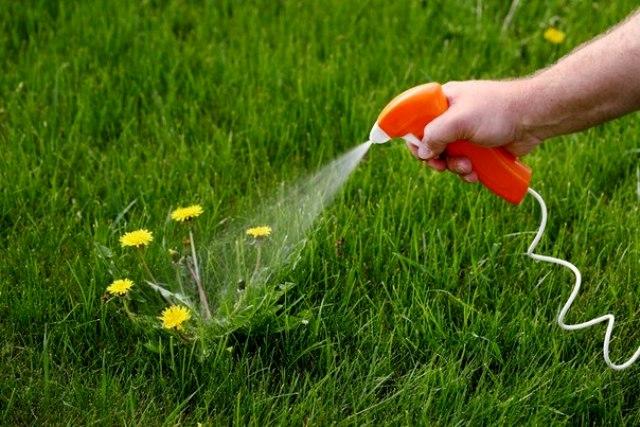 Гербициды для газона 1