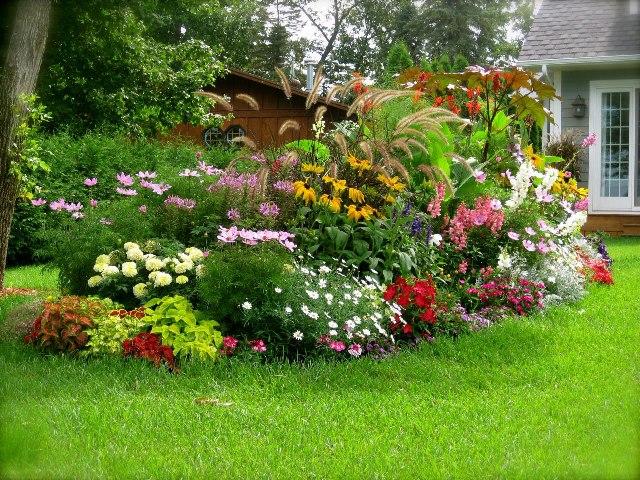 Цветущий газон 4