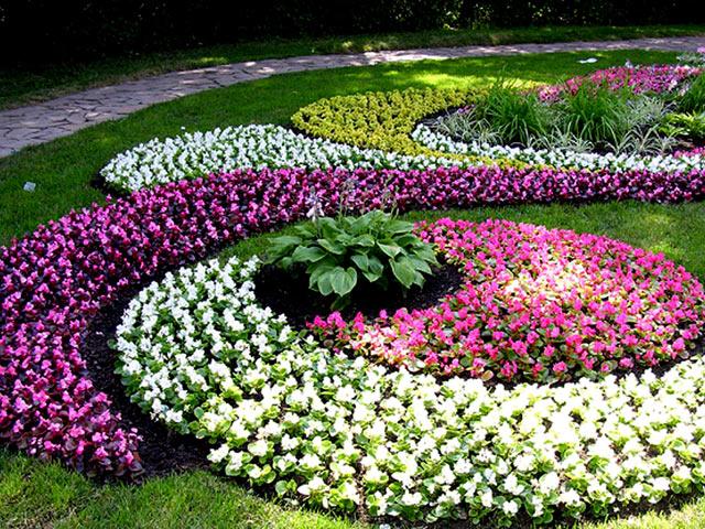 Цветущий газон 2