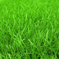 Хорошая трава – важный фактор для создания красивого газона