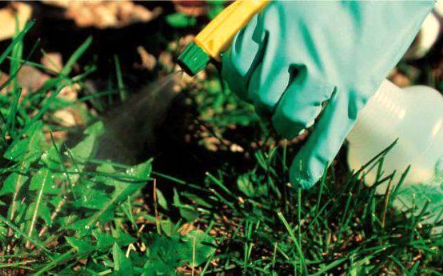 Гербициды для газона 2