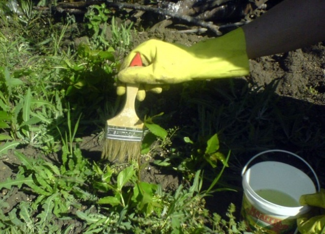 Гербициды для газона 3