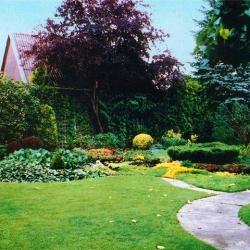 Как грамотно сделать красивый газон на даче своими руками?
