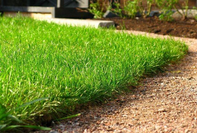 Посеянный газон