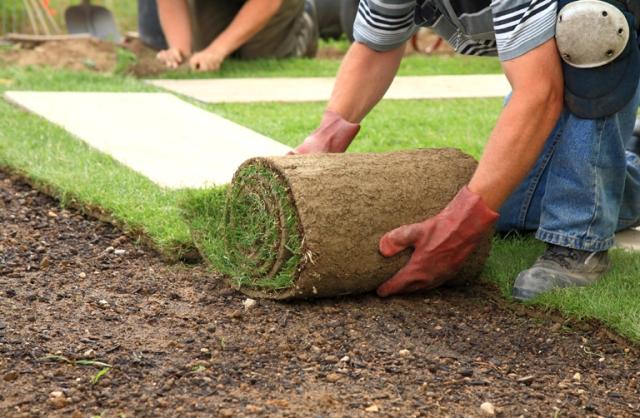 Раскатка рулонного газона