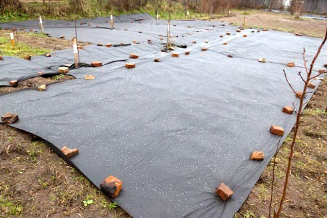 Укрытие посеянного газона