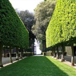 Живая высокая изгородь из деревьев – это всегда красиво, эффектно, надёжно
