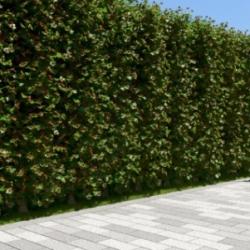 Шикарная и колючая живая изгородь из полезного боярышника