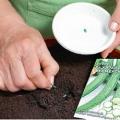 Высадка огуречных семян