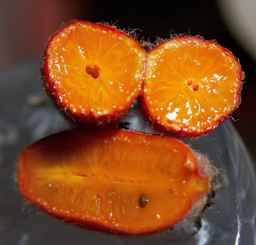 Плоды Тладианты сомнительной