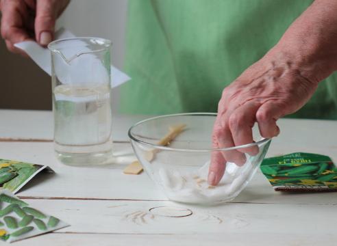 Замачивание семян в соли