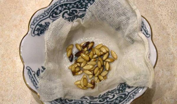 Семена в марле