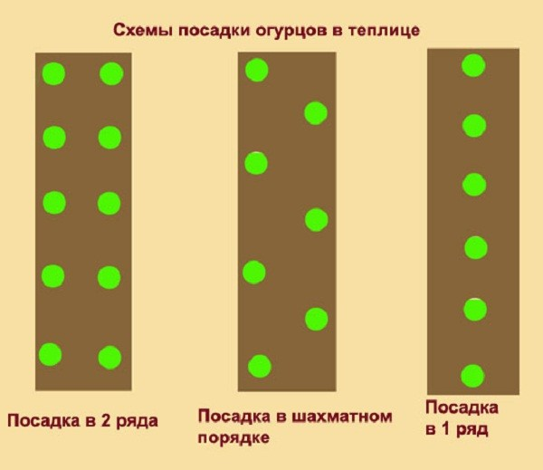 Схемы посадки огурцов