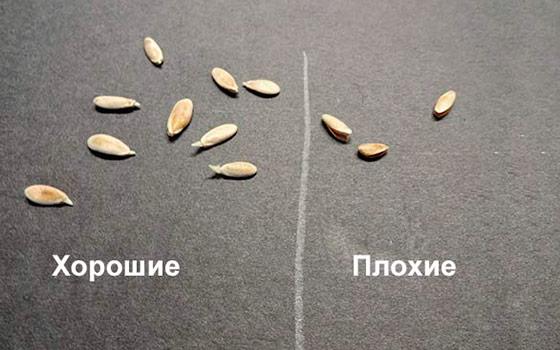 Сортировка семян